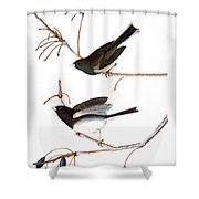 Audubon: Junco, (1827) Shower Curtain