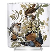 Audubon: Kestrel, 1827 Shower Curtain