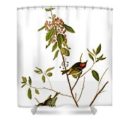 Audubon: Kinglet, 1827 Shower Curtain