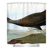 Audubon: Limpkin Shower Curtain