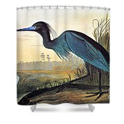 Audubon: Little Blue Heron Shower Curtain by Granger