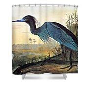 Audubon: Little Blue Heron Shower Curtain by Granger