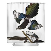 Audubon: Magpie Shower Curtain