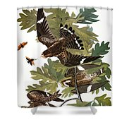 Audubon: Nighthawk Shower Curtain
