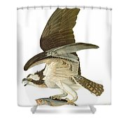 Audubon: Osprey Shower Curtain