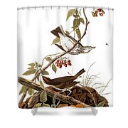 Audubon: Ovenbird Shower Curtain