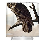 Audubon Owl Shower Curtain