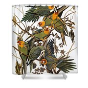 Audubon: Parakeet Shower Curtain