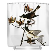 Audubon: Phoebe Shower Curtain