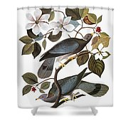 Audubon: Pigeon Shower Curtain
