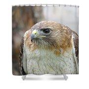 Audubon Quality Shower Curtain