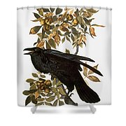 Audubon: Raven Shower Curtain
