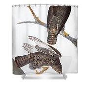 Audubon: Red-tailed Hawk Shower Curtain