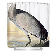 Audubon Sandhill Crane Shower Curtain