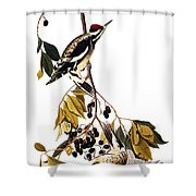Audubon Sapsucker, 1827-38 Shower Curtain