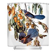 Audubon: Scrub Jay, 1827-38 Shower Curtain