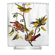 Audubon: Sparrows Shower Curtain
