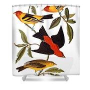 Audubon: Tanager, 1827 Shower Curtain