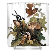 Audubon: Thrasher Shower Curtain