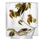 Audubon: Thrush Shower Curtain