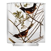 Audubon: Towhee Shower Curtain