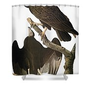Audubon: Turkey Vulture Shower Curtain