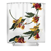 Audubon: Vireo, 1827-38 Shower Curtain