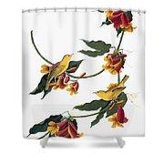 Audubon: Vireo, 1827-38 Shower Curtain