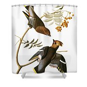 Audubon: Waxwing Shower Curtain