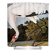 Audubon: Whooping Crane Shower Curtain