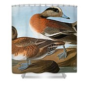 Audubon: Wigeon, 1827-38 Shower Curtain