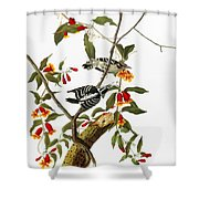 Audubon: Woodpecker, 1827 Shower Curtain