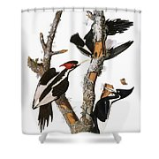 Audubon: Woodpecker Shower Curtain