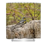 Audubon's Yellow Rumped Warbler Shower Curtain