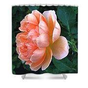 August Rose 09 Shower Curtain