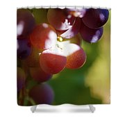 Auntie Thelma's Grapes - Ripening Shower Curtain