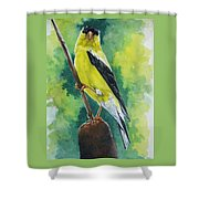 Aureate Shower Curtain