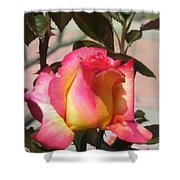Aurora Color Rose Bud. Wow Shower Curtain