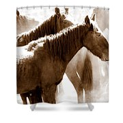 Wild Horses - Australian Brumbies 3 Shower Curtain