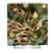 Australia Ingumnuts Shower Curtain