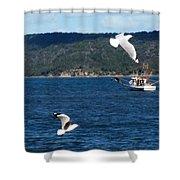 Australia - Seagulls And Trawlers Shower Curtain