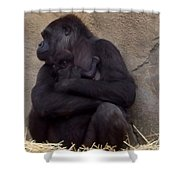 Australia - Baby Gorilla In Mums Arms Shower Curtain