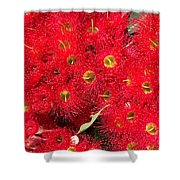 Australian Native Eucalyptus Flowers Shower Curtain