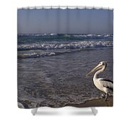 Australian Pelican And Surf Shower Curtain