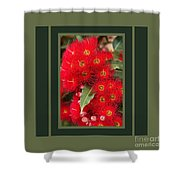 Australian Red Eucalyptus Flowers With Design Shower Curtain