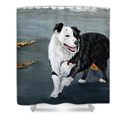 Australian Shepard Border Collie Shower Curtain