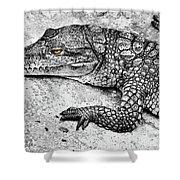 Australian Shy Crocodile  Shower Curtain