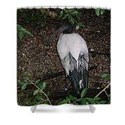Australian White Ibis Shower Curtain