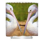 Australian White Pelicans Shower Curtain