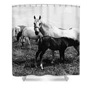 Austria: Horse Farm Shower Curtain